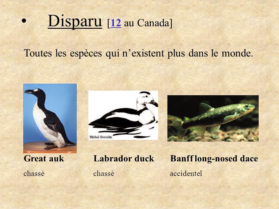 Disparu [12 au Canada] Toutes les espèces qui n'existent plus dans le monde. Great auk. chassé. Labrador duck.